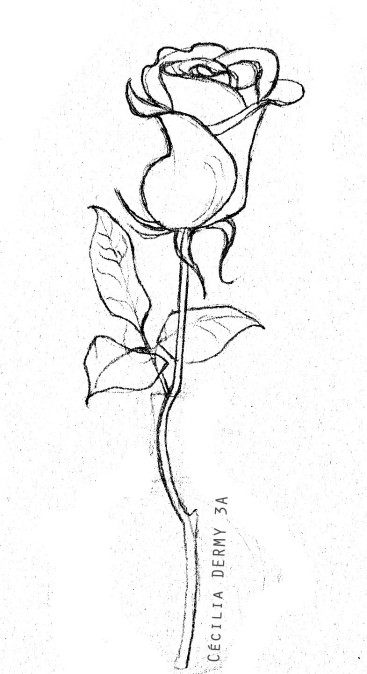 Caricature de Végétaux